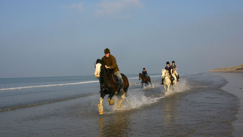 Horses Galloping Rossbeigh5